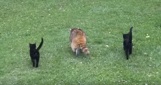 YouTube - Blind Raccoon and his bodyguards